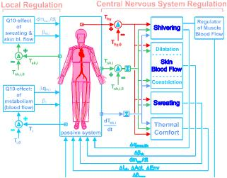 Diagram of the active system